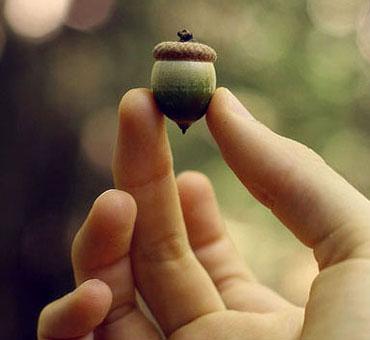 entelechy-acorn